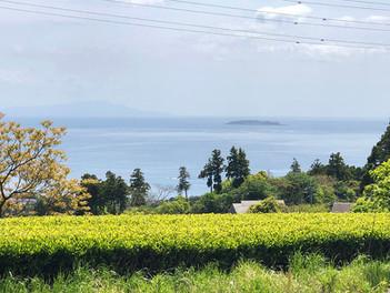 湯河原の茶畑のある風景
