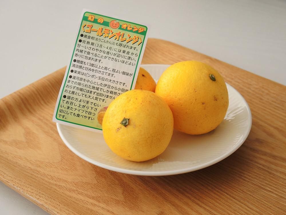 湯河原 ゴールデンオレンジ