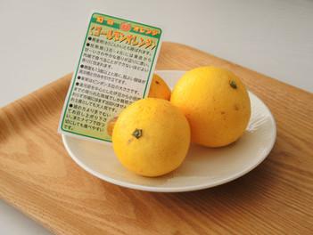幻のオレンジ「ゴールデンオレンジ」