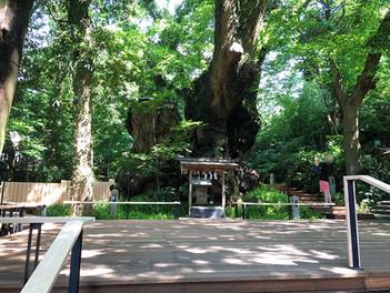 来宮神社 大楠の周囲にボードウォーク