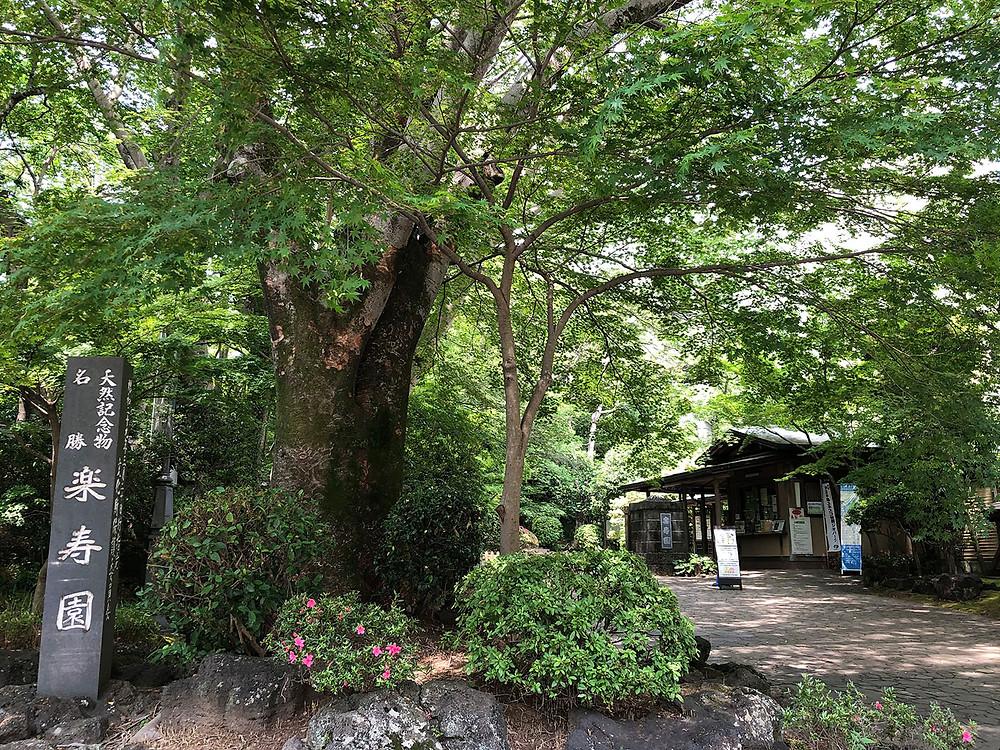 天然記念物及び名勝 三島楽寿園