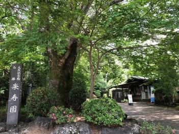 三島市立公園 楽寿園の散歩