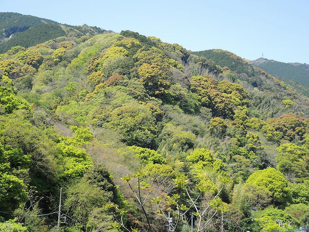 熱海の新緑の季節