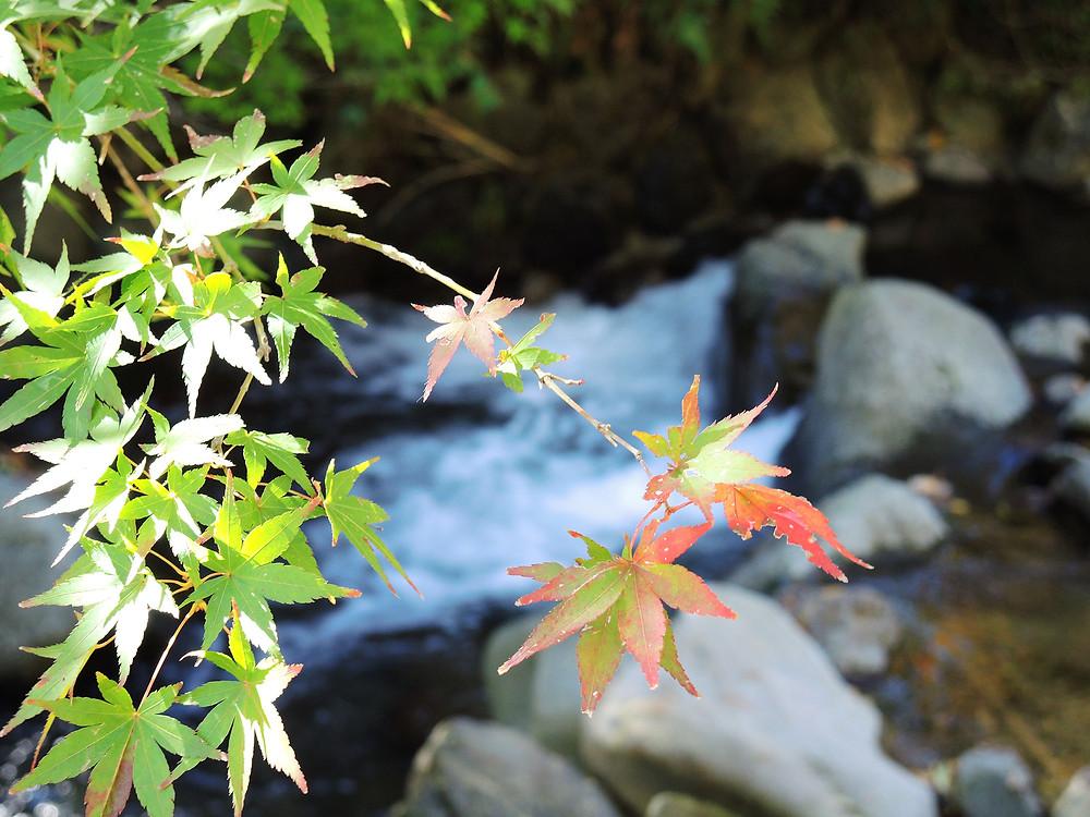 熱海梅園の紅葉まつり