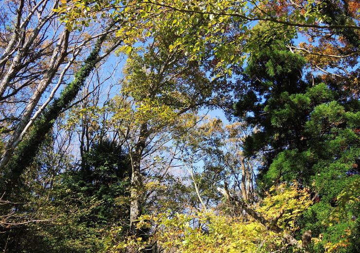 森に囲まれた熱海市伊豆山温泉付き別荘地