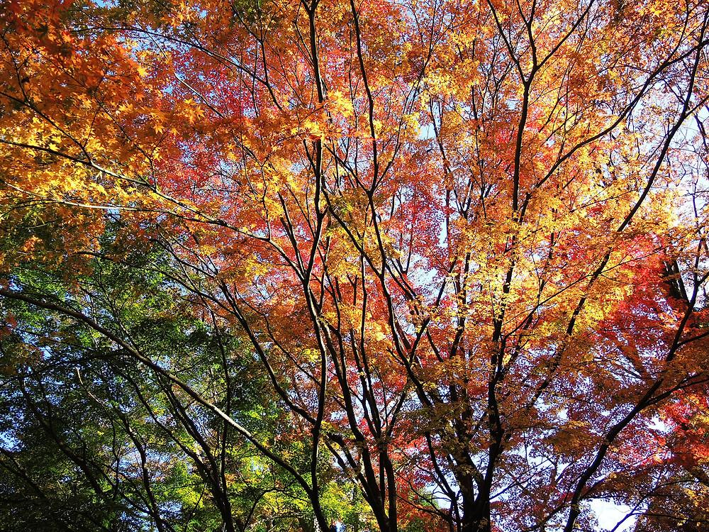 熱海姫の沢公園の紅葉
