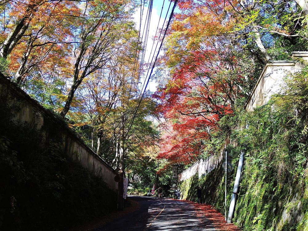 奥湯河原の秋の風景