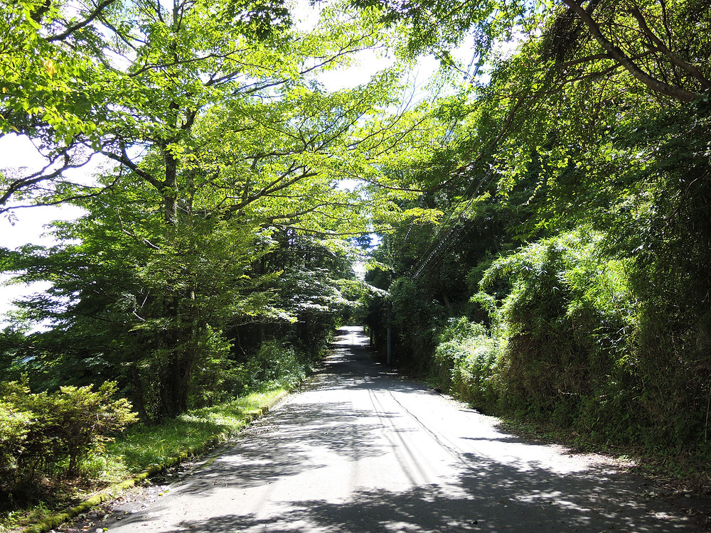 箱根町元箱根売ホテルの前面道路