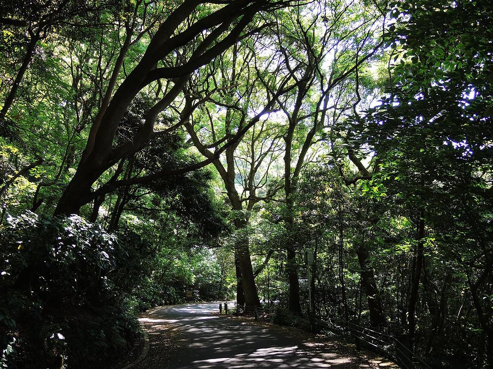 県立真鶴半島自然公園 真鶴別荘不動産Irodoriいろどり