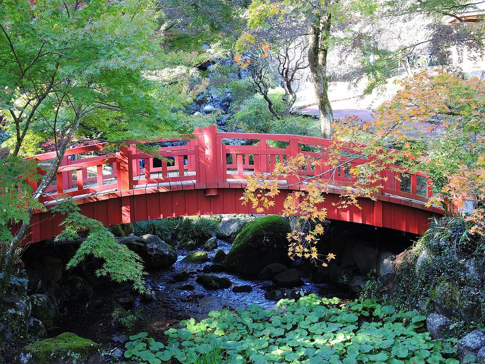 熱海梅園日本で最も遅い紅葉のもみじまつり