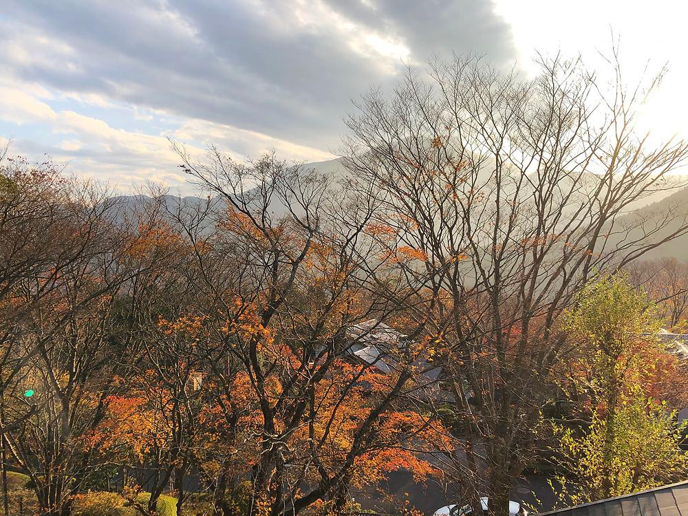 箱根明神平の風景