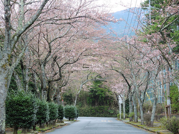 春を感じる山の香り