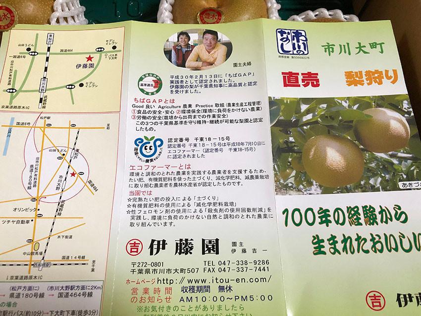 千葉県市川産豊水梨
