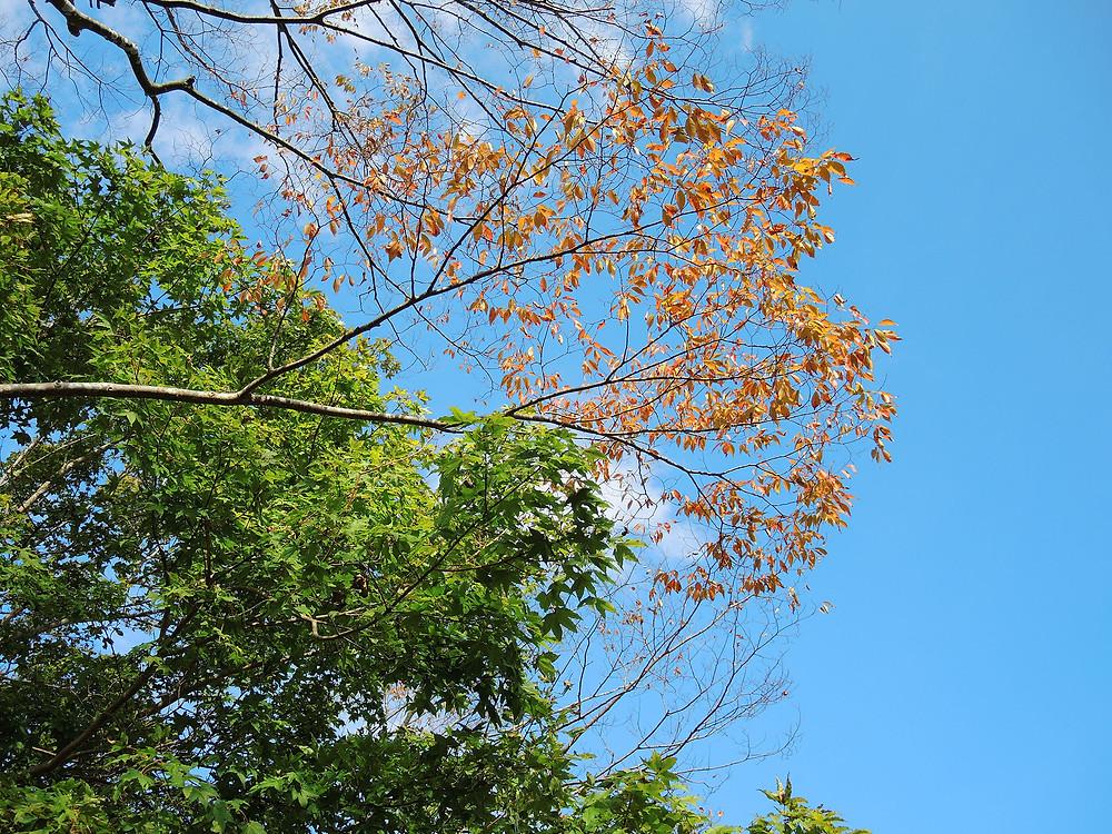 箱根芦ノ湖箱根町港の色づいた葉