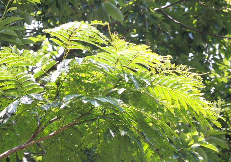 伊豆山神社に隣接する森
