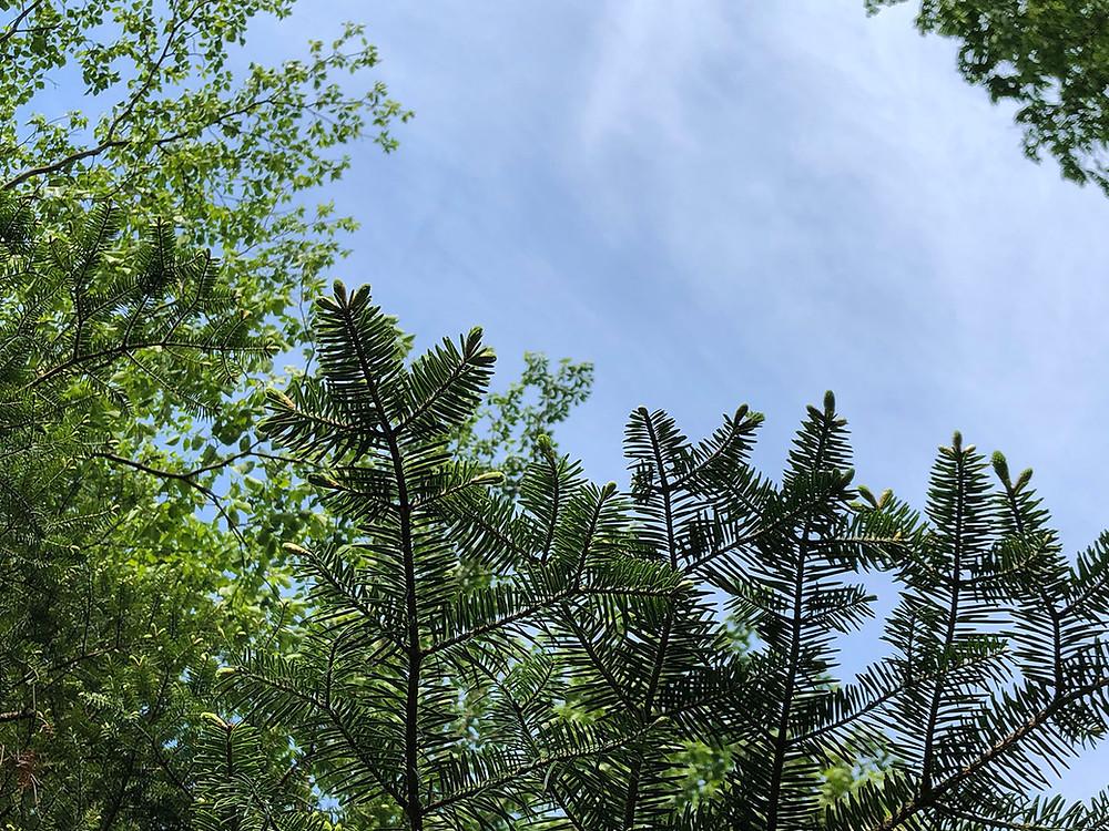 山の木々は緑が濃く 熱海別荘不動産Irodoriいろどり
