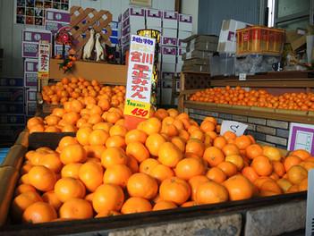 湯河原の地物みかんが買える石澤商店