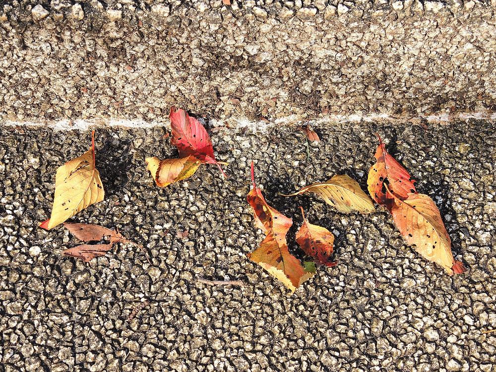 湯河原別荘の秋の色づいた落ち葉