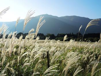箱根 仙石原すすき草原