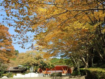 熱海 姫の沢公園 秋の色づき