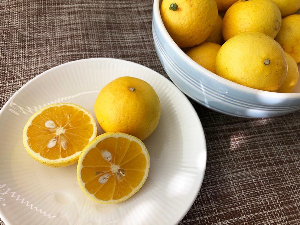 黄金柑 ゴールデンオレンジ