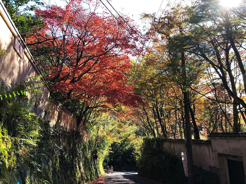奥湯河原の情緒ある紅葉の様子