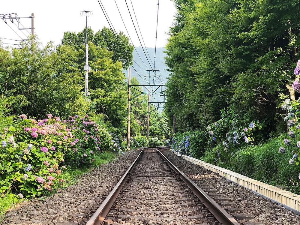 箱根登山電車の運転再開 箱根別荘不動産 Irodoriいろどり