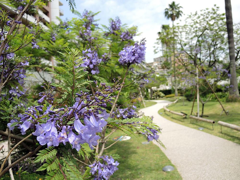 熱海ジャカランダ遊歩道
