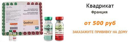 Вакцина Квадрикет