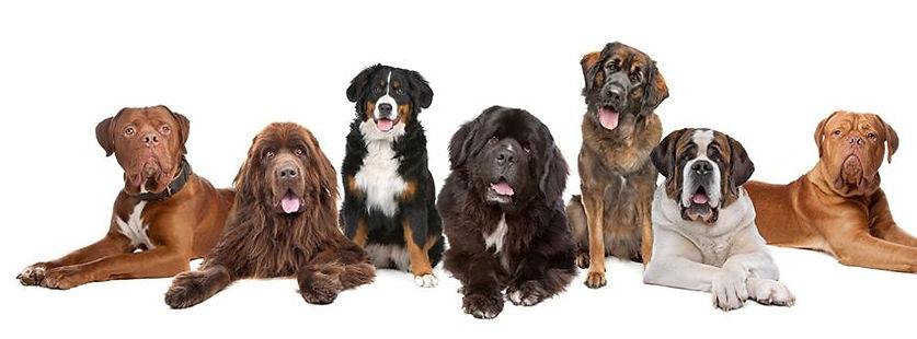 Вызов ветеринара для стерилизации собаки