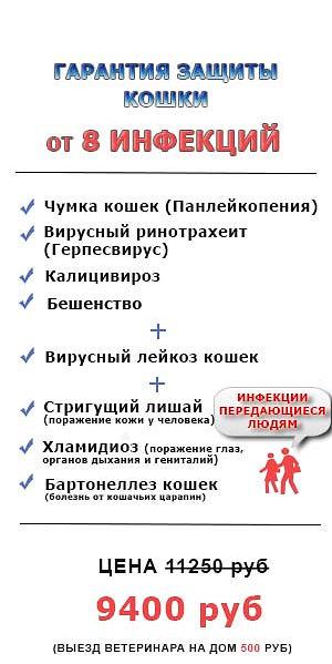 Защита кошки от 8 инфекций