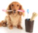 Чистка зубов у кошек и собак