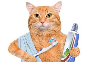 Чистка зубов на дому