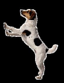 Прививка от бешенства собаке на дому