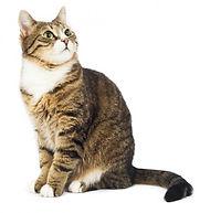 Цена стерилизации кошек. Акция - стерилизация кошки от 2500 руб.
