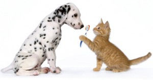 Вызов ветеринара стоматолога на дом