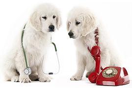 Прививка щенков на дому