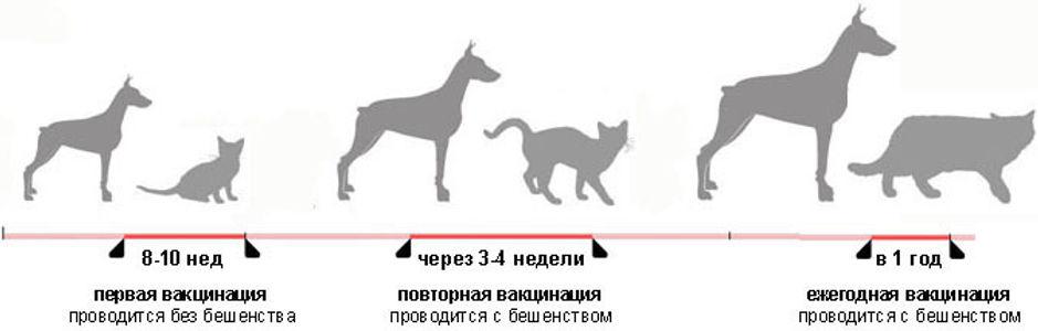 График прививок животных