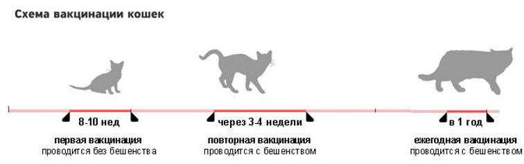График прививок кошек