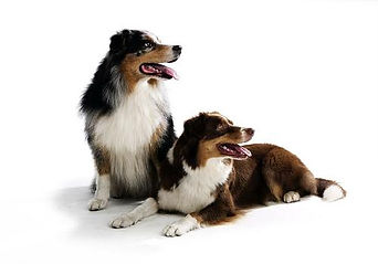собака ветеринар на дом.jpg