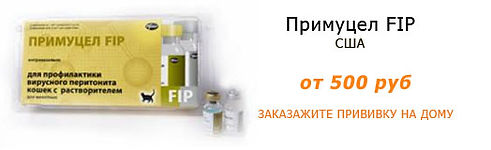 Вакцина Примуцел FIP