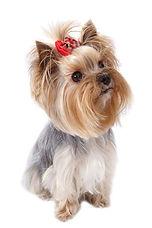 Вакцинация от бешенства собаке на дому