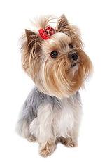 Прививка собакам на дому