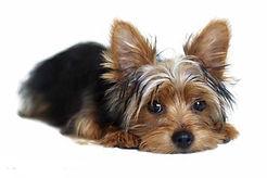 Стерилизовать собаку на дому