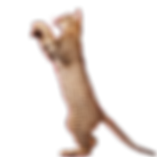 Вакцинация кошек Мультифел-4