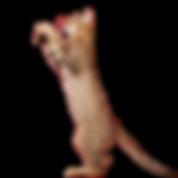 Вакцинация от бешенства кошек