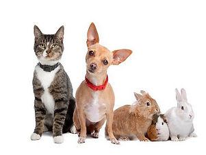 животные 1.jpg