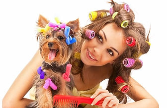 Кастрировать собаку на дому