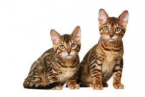 кошки 1.jpg