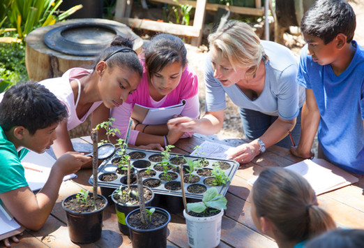 Lição de jardinagem